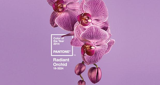 radiant_orquid