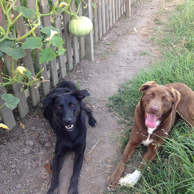 Aries perros